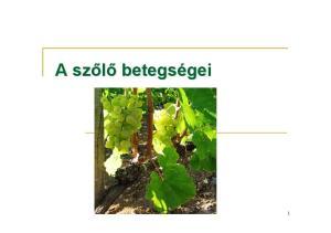 A szőlő betegségei 1