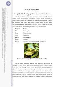 Gambar 1 Pohon api-api (Avicennia marina (Forks.)Vierh.) Sumber: Wibowo et. al (2009)