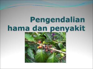 Hama penyakit utama tanaman kopi