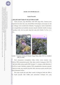 HASIL DAN PEMBAHASAN. Gejala Penyakit. (a) Gambar 7 Tanaman kentang di Dataran Tinggi Dieng tahun 2012 (a) terinfeksi NSK, (b) sehat