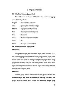 I. TINJAUAN PUSTAKA Klasifikasi Tanaman Jagung Manis. Menurut Purwono dan Hartono (2007) sistematika dari tanaman jagung