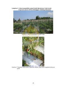 Lampiran 1. Lokasi pengambilan sampel tanah diperakaran Cabai merah (Capsicum annum) di Desa Kebanggan, Sumbang, Banyumas