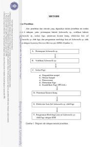 METODE. A. Peremajaan Salmonella sp. B. Verifikasi Salmonella sp
