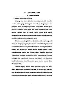 TINJAUAN PUSTAKA. A. Tanaman Singkong. prasejarah. Potensi singkong menjadikannya sebagai bahan makanan pokok