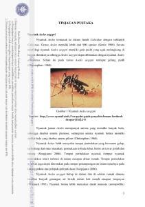 TINJAUAN PUSTAKA Nyamuk Aedes aegypti